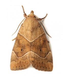 moth-[keyword link=false strong=false]
